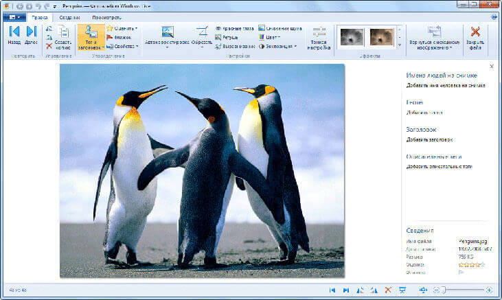 фотоальбом windows live